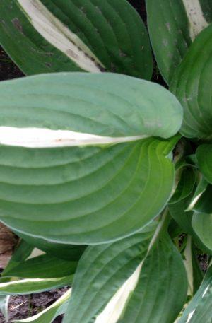 An kylpa
